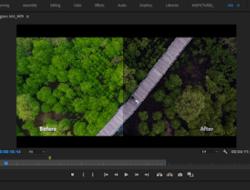 Apa Itu LUT, Jenis dan Fungsinya ? | Free Download Cinematic Luts Anjpictures